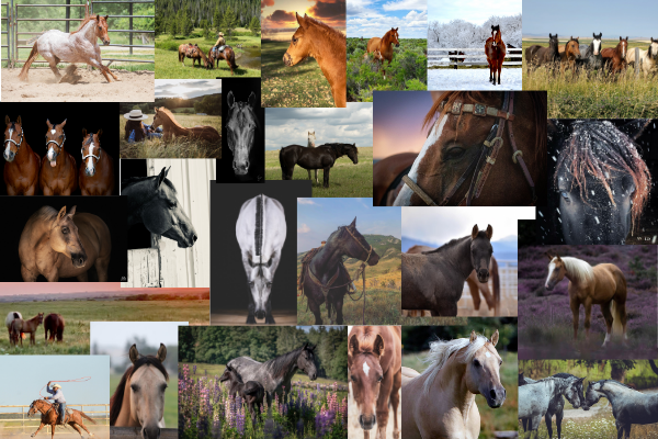 A gallery of top AQHA photo contest photos