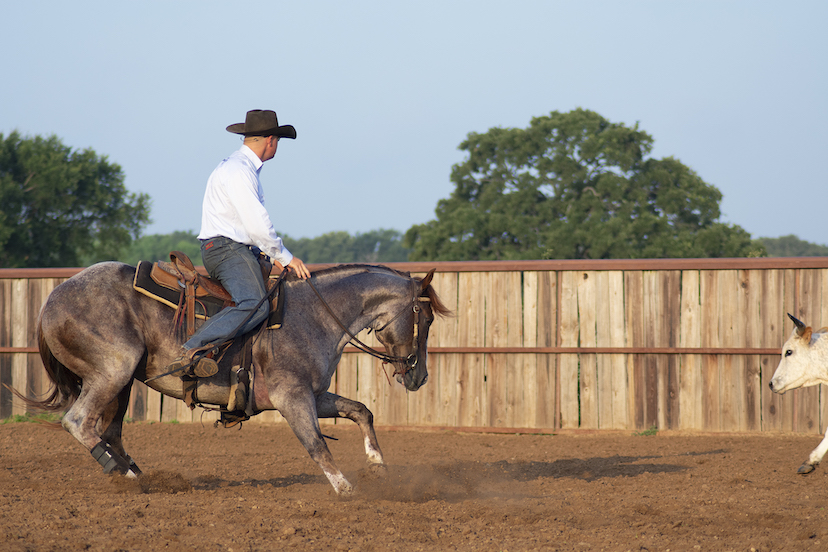 cow horse trainer Clay Volmer works a cow aboard a red roan horse (Credit: courtesy of Clay Volmer)
