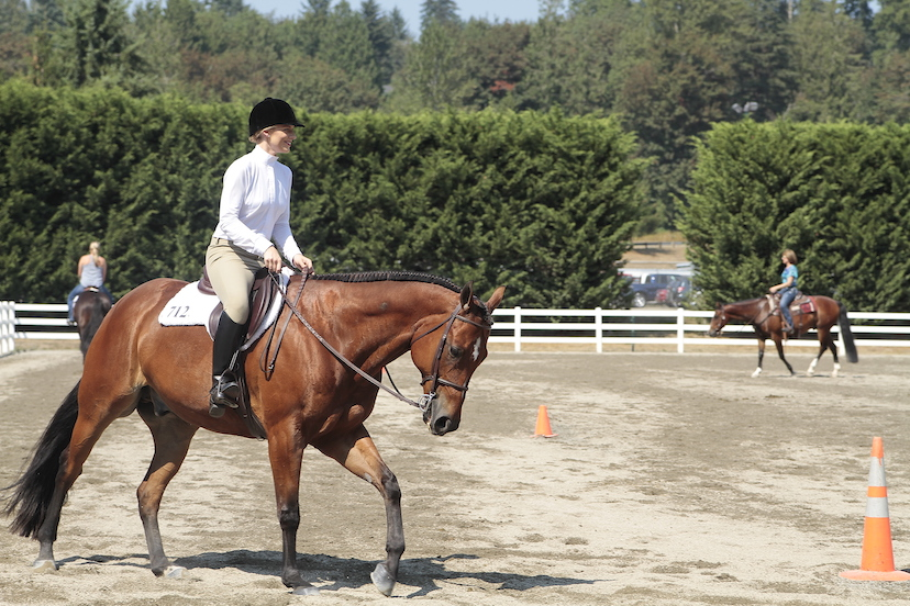 a bay horse canters in the warm-up pen at a horse show (Credit: Journal)