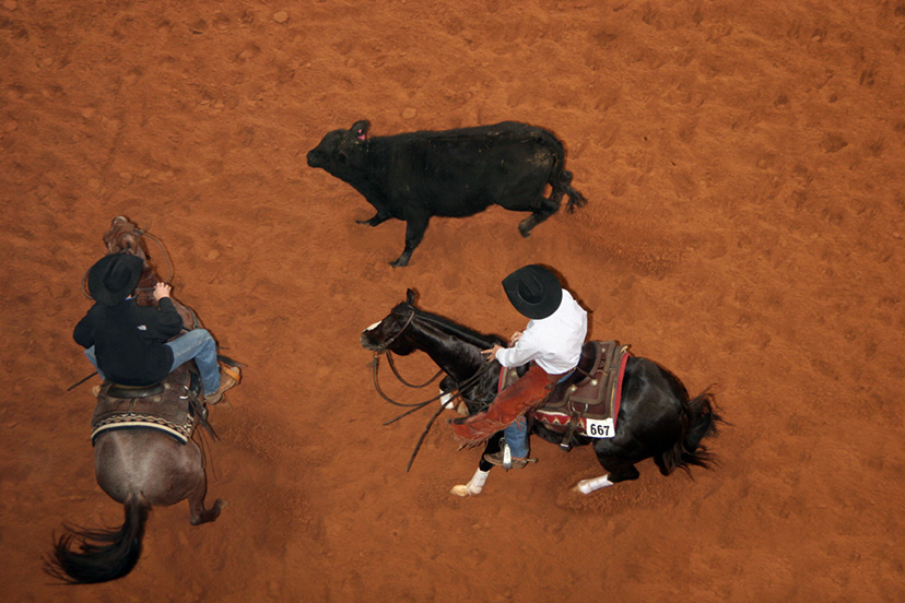 Boyd Rice cuts a cow during the 2009 AQHA World Show senior cutting prelims aboard Sophisticated Catt. (Credit: Journal)