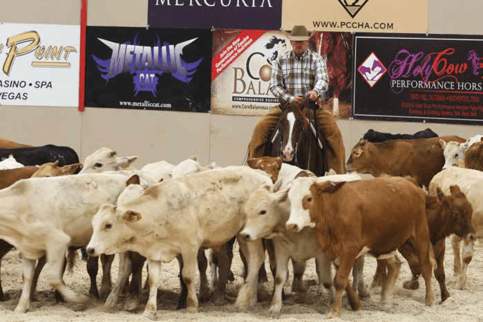 "a cutting horse and rider drive a herd of Brahman cross cattle with a lot of ""ear"""