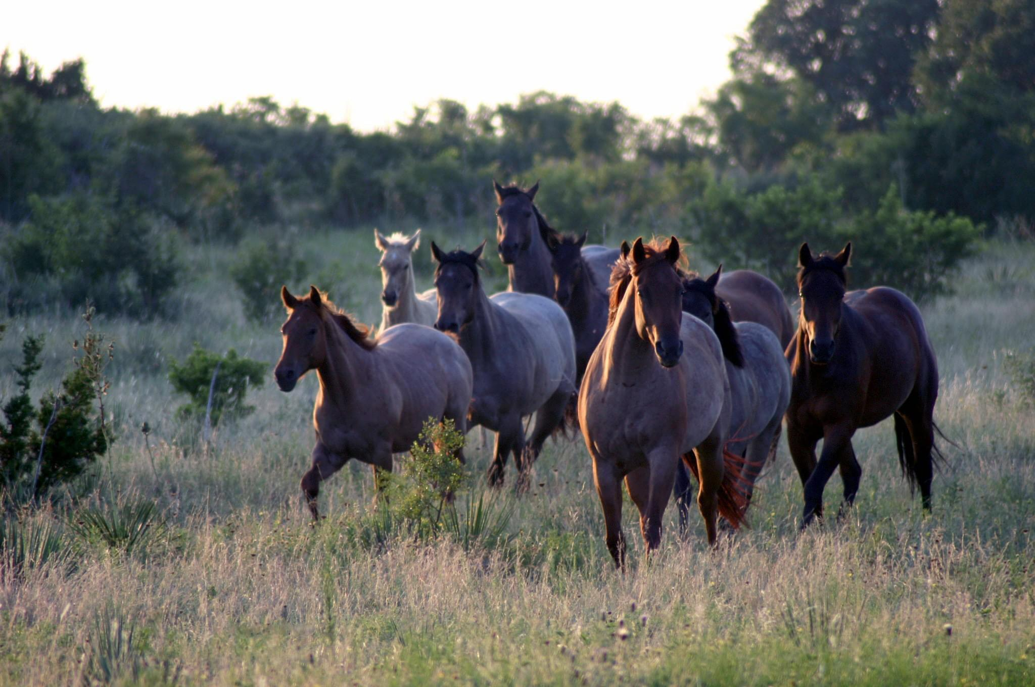 roan horse mare herd in pasture (Credit: Baru Forell)