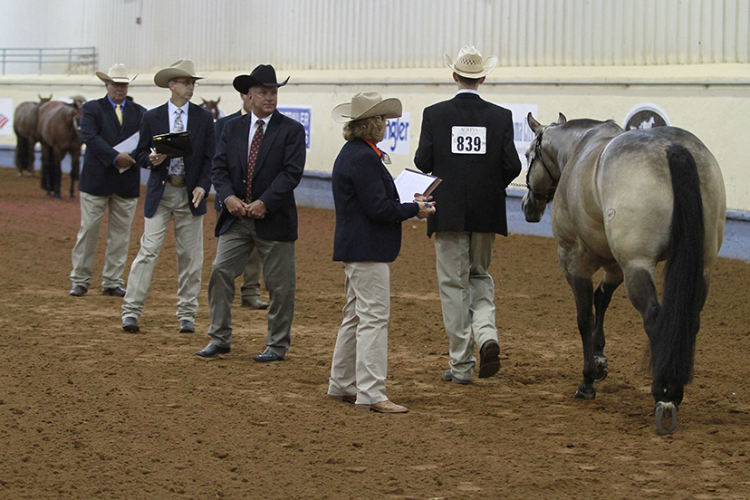 a male youth exhibitor leads a buckskin mare past a line of judges in a performance halter class at the 2014 AQHYA World Show (Credit: Journal)