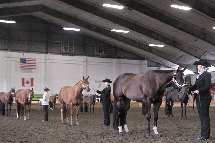 performance halter line-up (Credit: Journal)