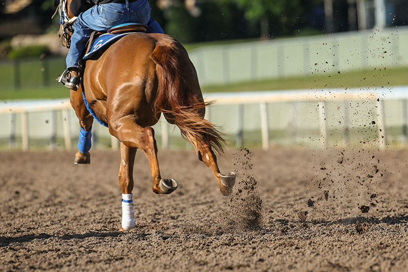 racehorse cardiac conditioning (Credit: Bee Silva)