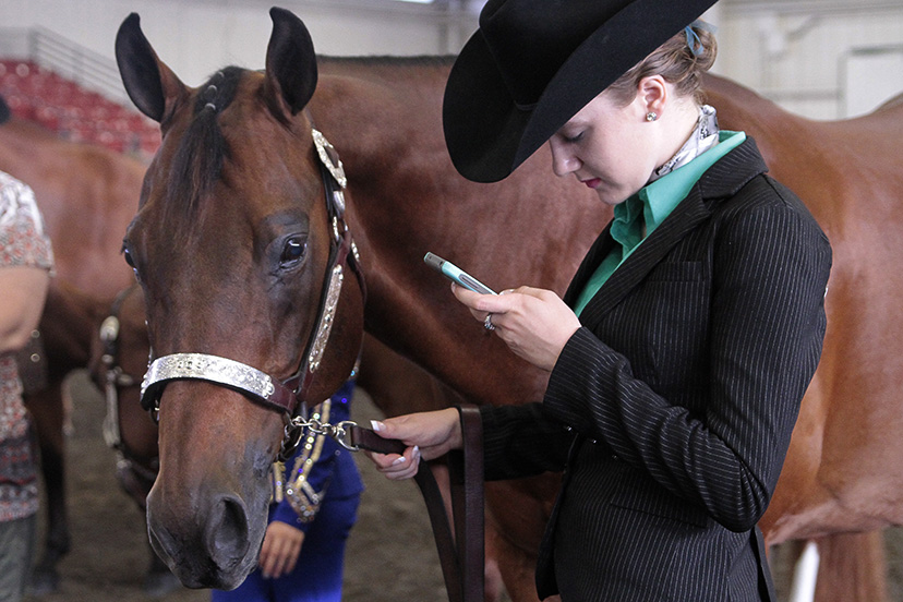 showmanship exhibitor looks at iPhone while holding bay horse (Credit: Journal)