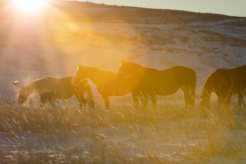 generic wagonhound horses snow winter sunset (Credit: AQHA)