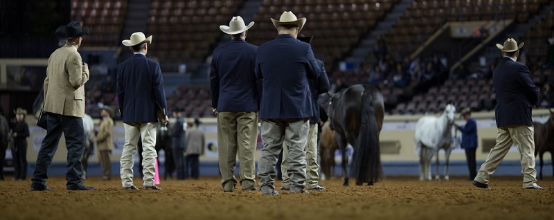 a group of judges are standing in the arena evaluating halter horses