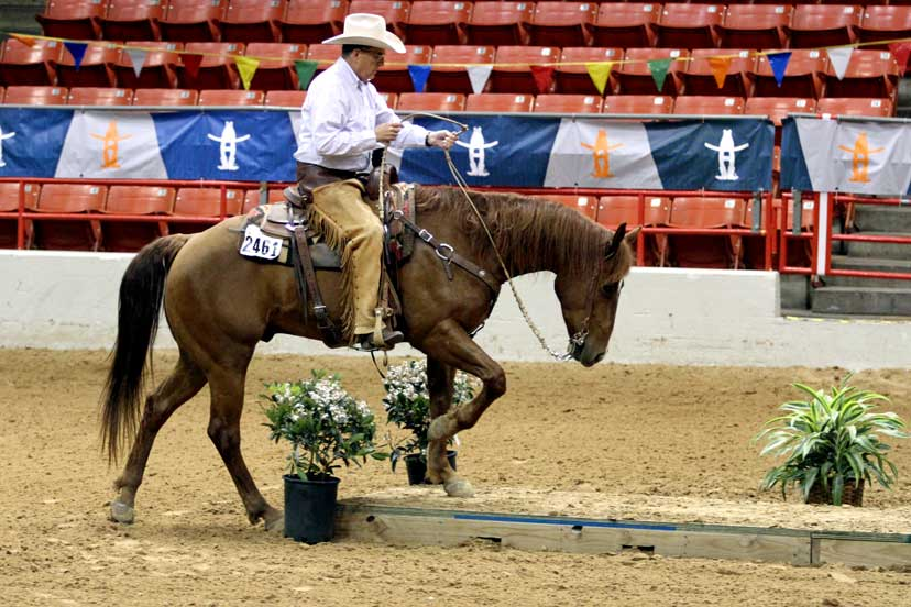 A man wearing western clothes is riding a brown horse in a competition arena. They are stepping up onto a bridge.