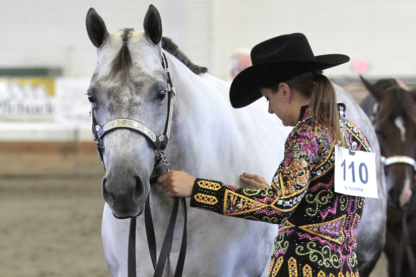 gray horse halter class (Credit: Journal)