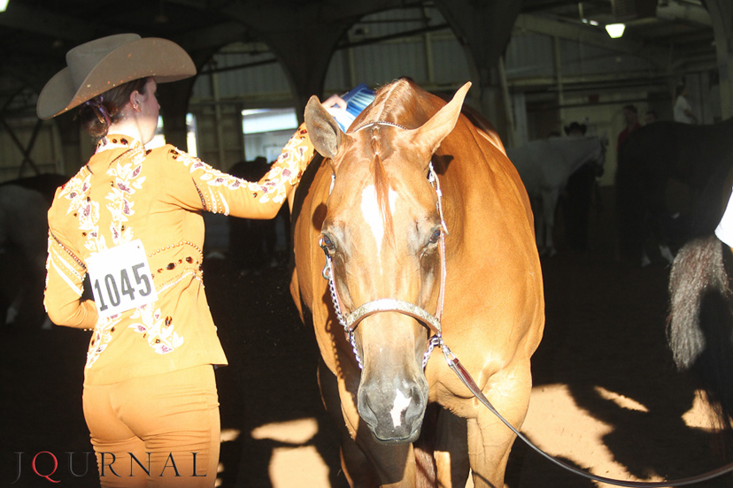 showmanship exhibitor grooming horse