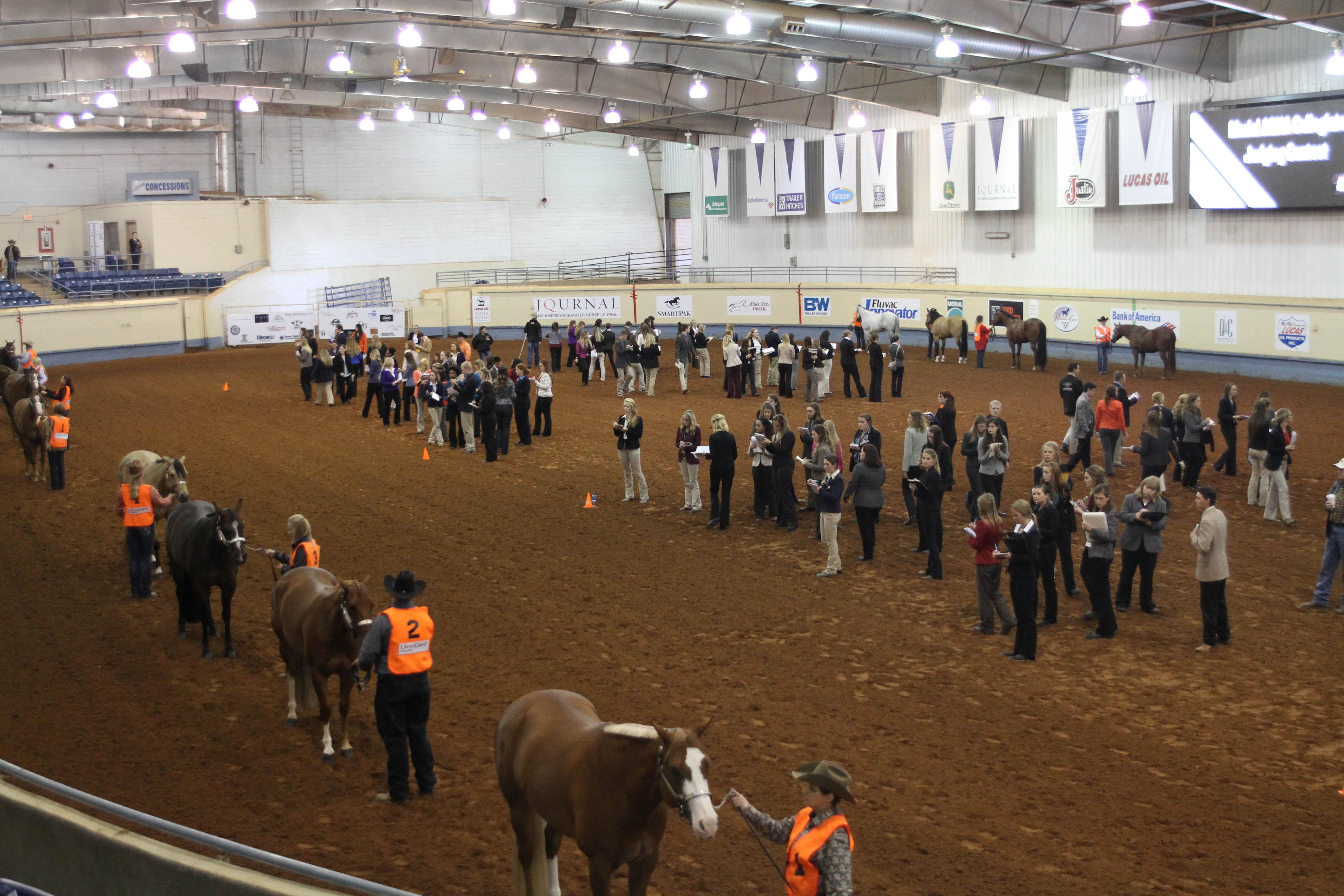 competitive horse judging contestants judge a halter horse class