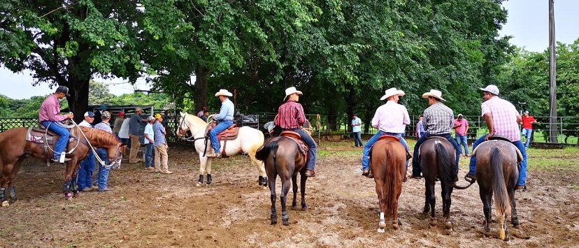 Cowboys on horses in a line waiting to rope