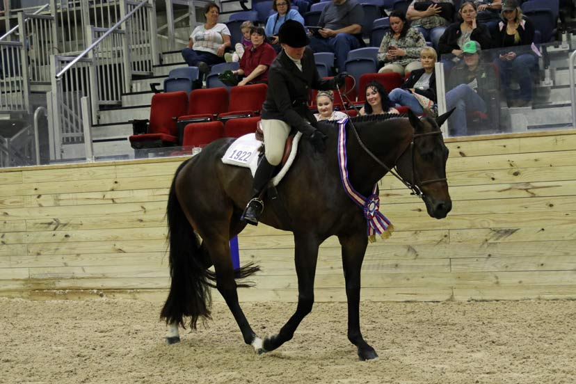 Rookies competed in walk-trot equitation at the 2019 Nutrena East AQHA Level 1 Championships in Wilmington, Ohio.