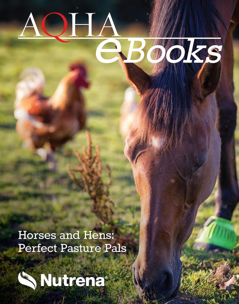 a horse and a chicken graze side by side on the cover of this e-book from AQHA