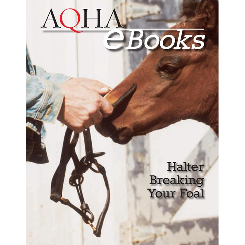 Day Three: Halter-training Your Foal (Your Foal: Essential Training Book 3)