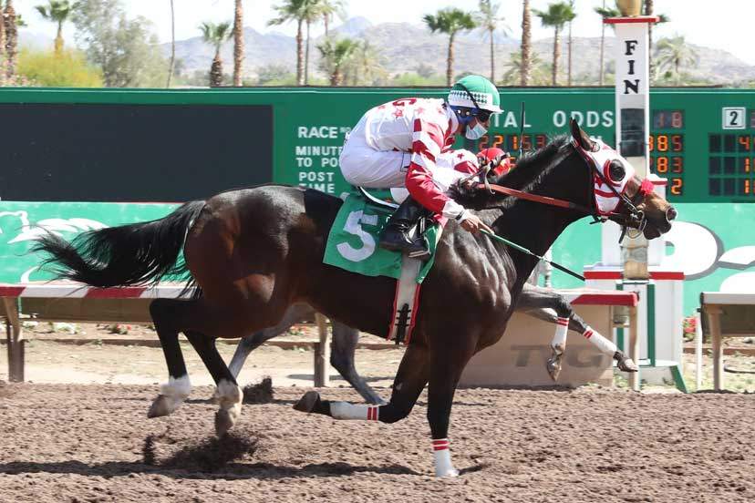 Day Thuggin wins a trial for the 2021 Desert Classic Futurity. PHOTO: Coady Photography