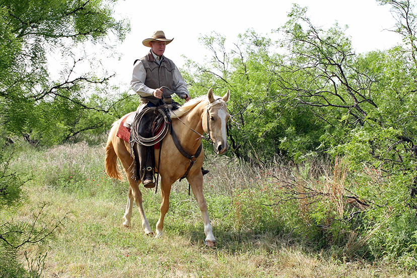 Buster McLaury rides a palomino horse through mesquite brush while training for transitions (Credit: Andrea Caudill/Journal)