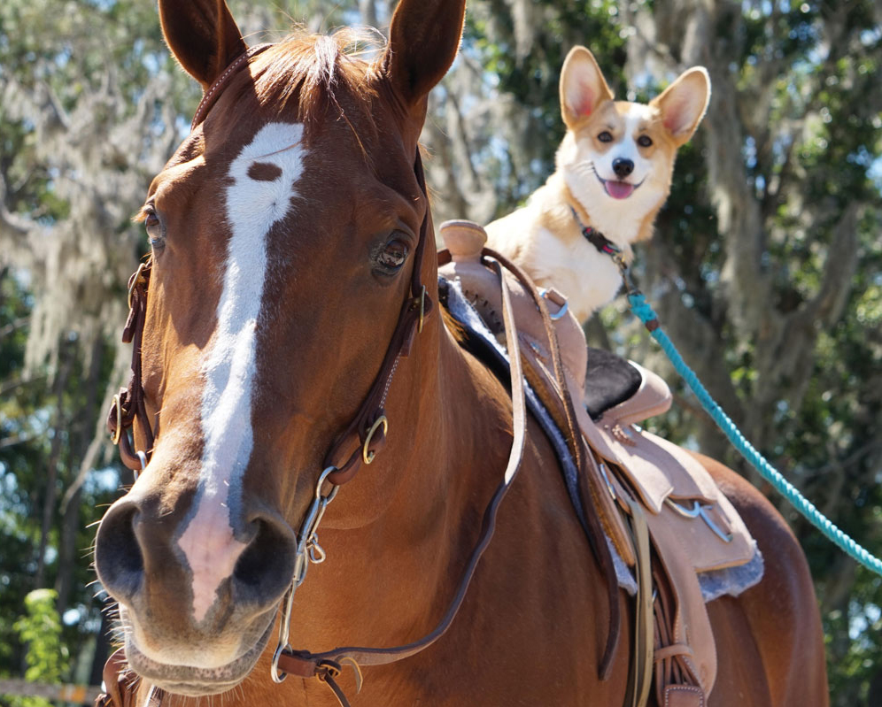 horse with dog in the saddle (Credit:Emilie Carpenter)