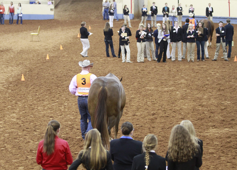 AQHYA Horse Judging Contest at 2014 AQHYA World Show (Credit: Journal)